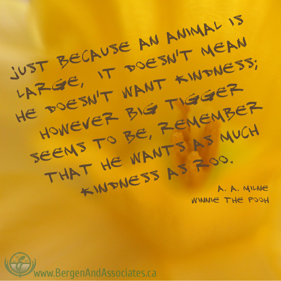 "Just because an animal is large, it doesn't mean he doesn't want kindness; however big tigger seems to be, remember that he wants as much kindness as Roo. "" A quote by A.A. Milne Winnie the Pooh"