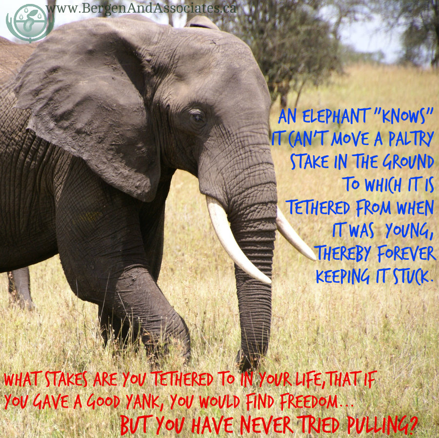 An elephant knows it cannot move a paltry stake in the ground from what it learned as a child What patterns are you stuck in because you have never tried to pull free?
