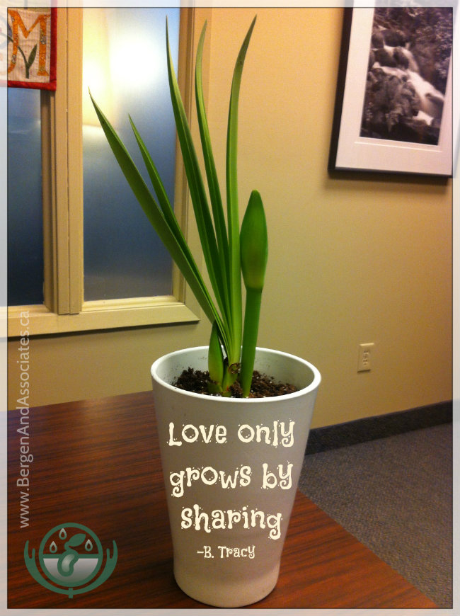 Week 3 of Espy, the growing plant of hope at Bergen and Associates Counselling