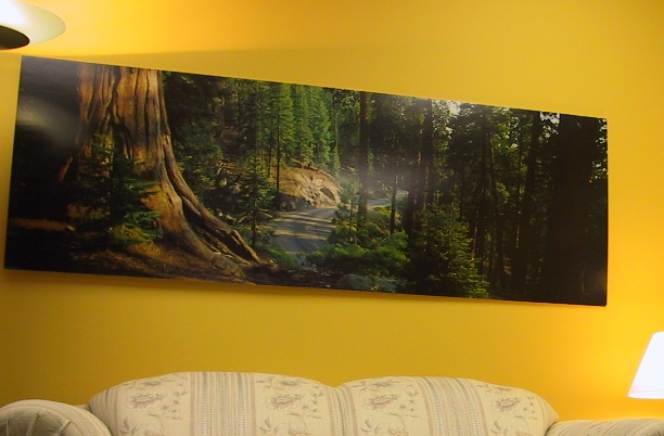 A picture depicting the Sequioa tree in Bergen and Associates office in Winnipeg Manitoba