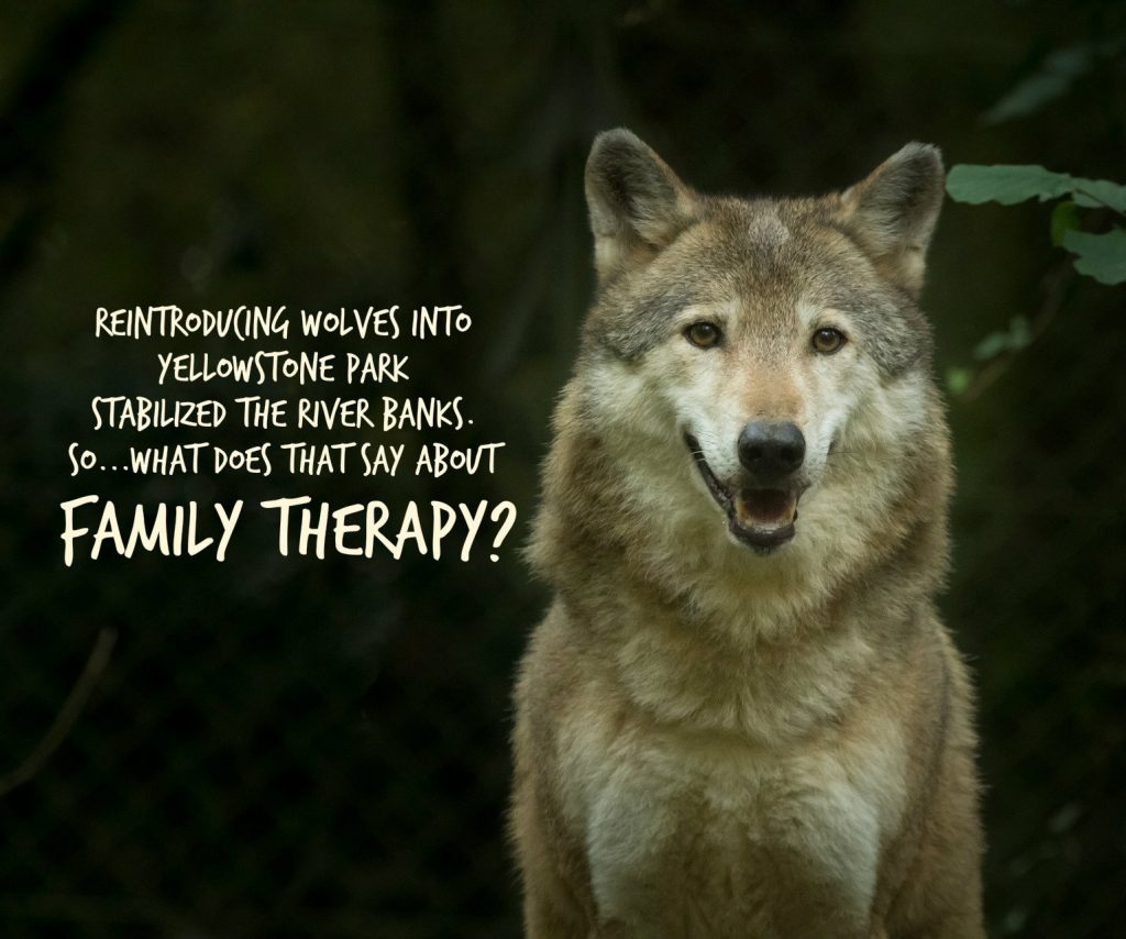 When wolves were reintroduced into Yellowstone Park, the river banks were strengthened. What does that have to do with family therapy?