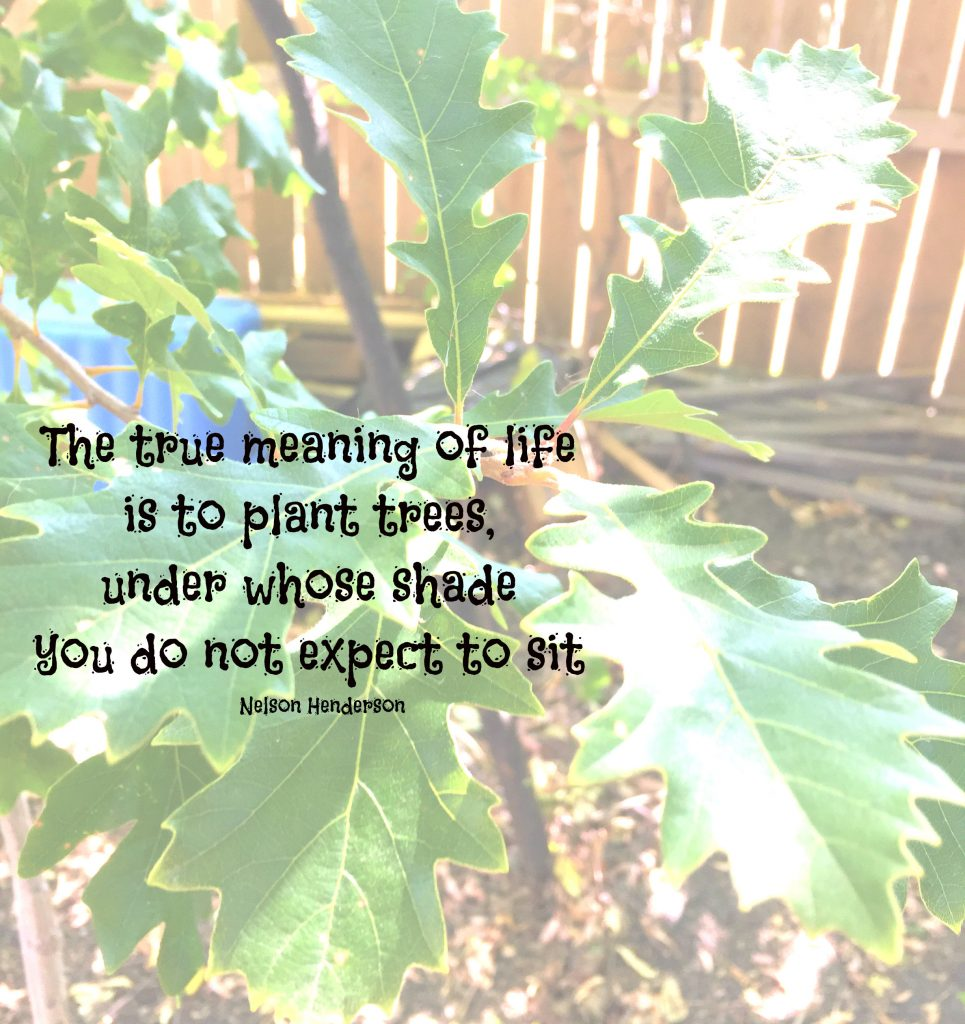 The true meaning of life is to plant trees under whose shade you will likely never sit. Quote by Nelson Henderson on Conexus blog about planting an Oak tree