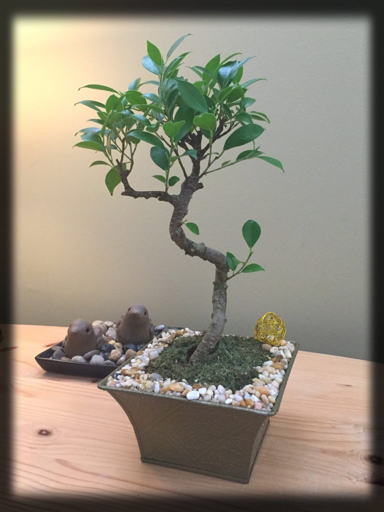 The gift of the bonsai tree from Natalie was beautiful!