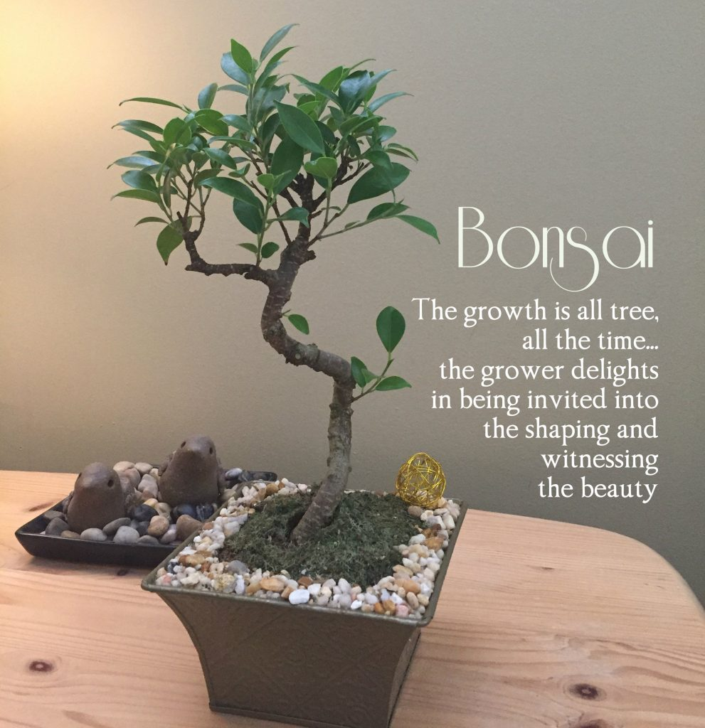 Bonsai: The growth is all tree all the time, the grower delights in shaping and witnessing