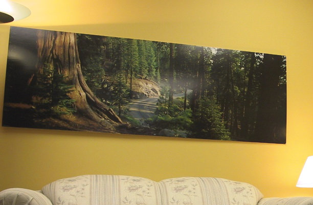 Sequoia picture on wall above the couch in counselling office years ago. On blog about Carolyn Klassen's TEDx talk