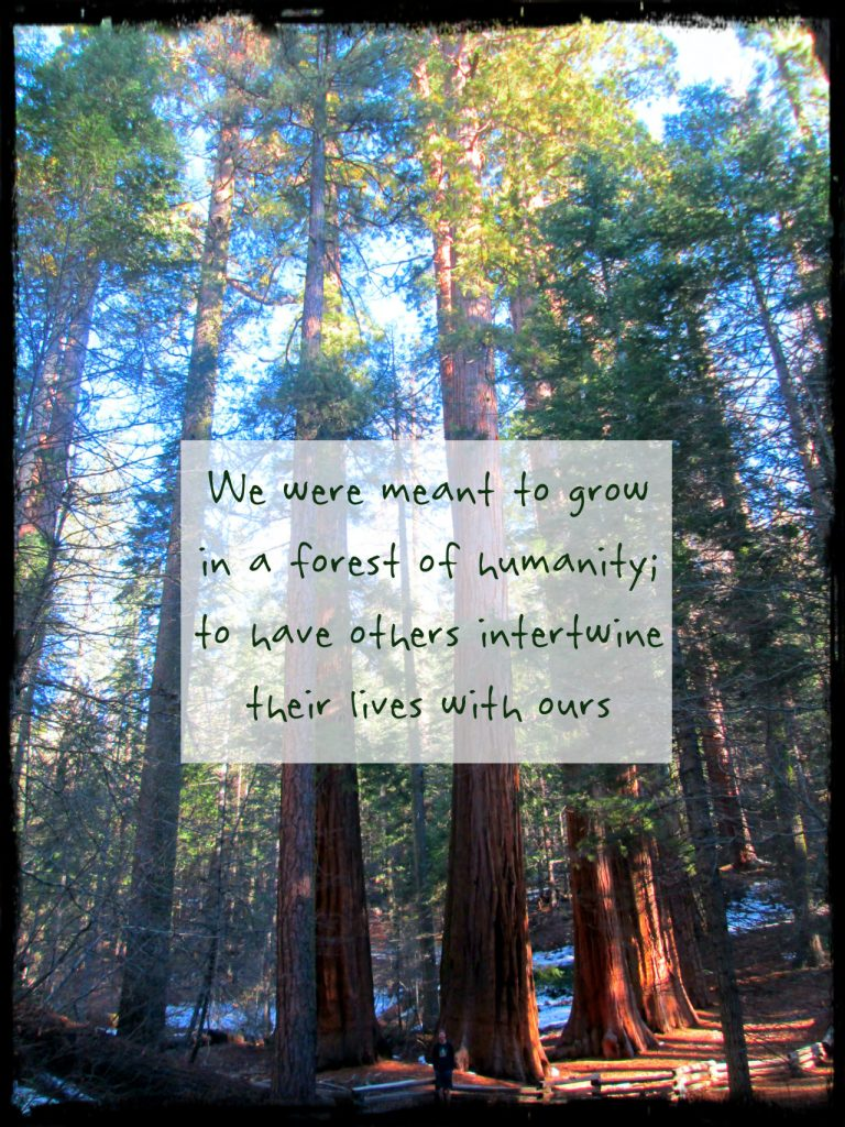 We were meant to grow in a forest of humanity. to have lives intertwine with our. On blog re: TEDx talk Learning from the sequoias