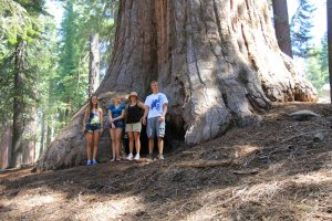 Sequoia tree--an enormous tree. On blog about poking holes in the darkness