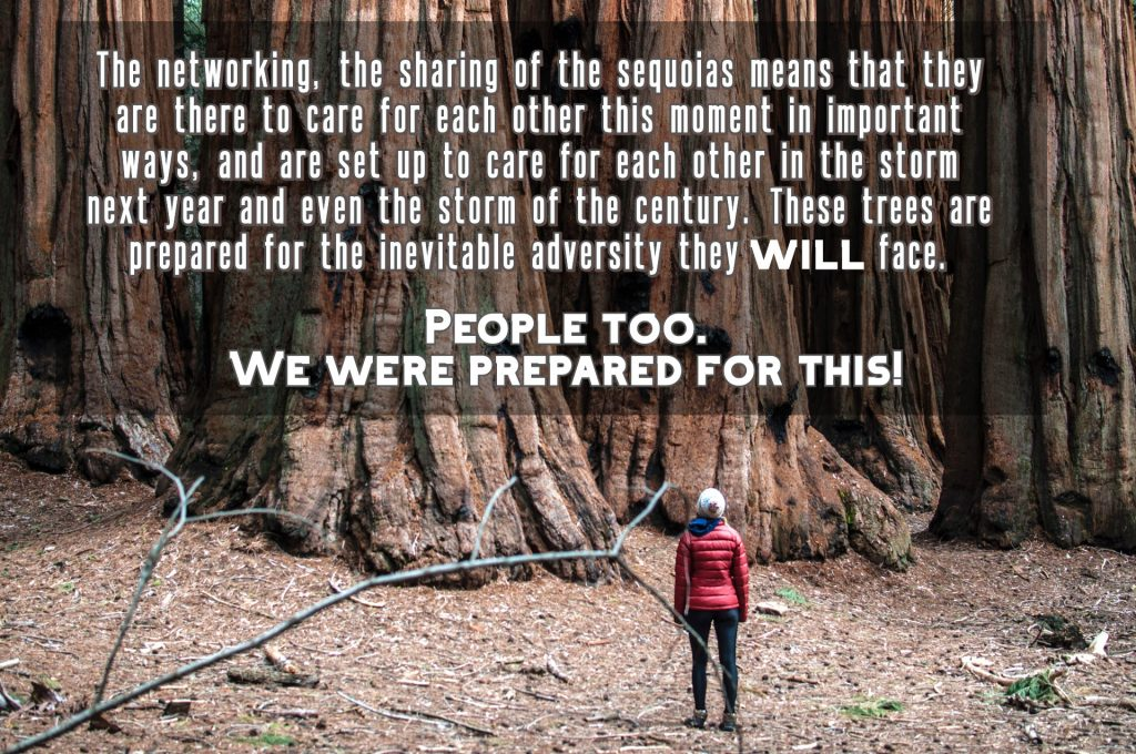 The networking, the sharing of the sequoias means they are there to care for each other this moment and set up to care for each other in the storm of the century. We were prepared for this.