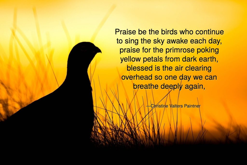 Praise be the birds who continue to sing the sky awake each day, praise for the primrose poking from dark earth, blessed is the air clearing overhead Paintner