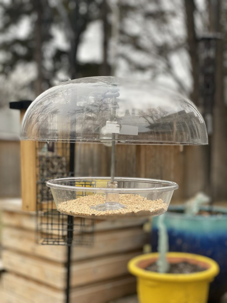 Bird feeders galore for pandemic survival