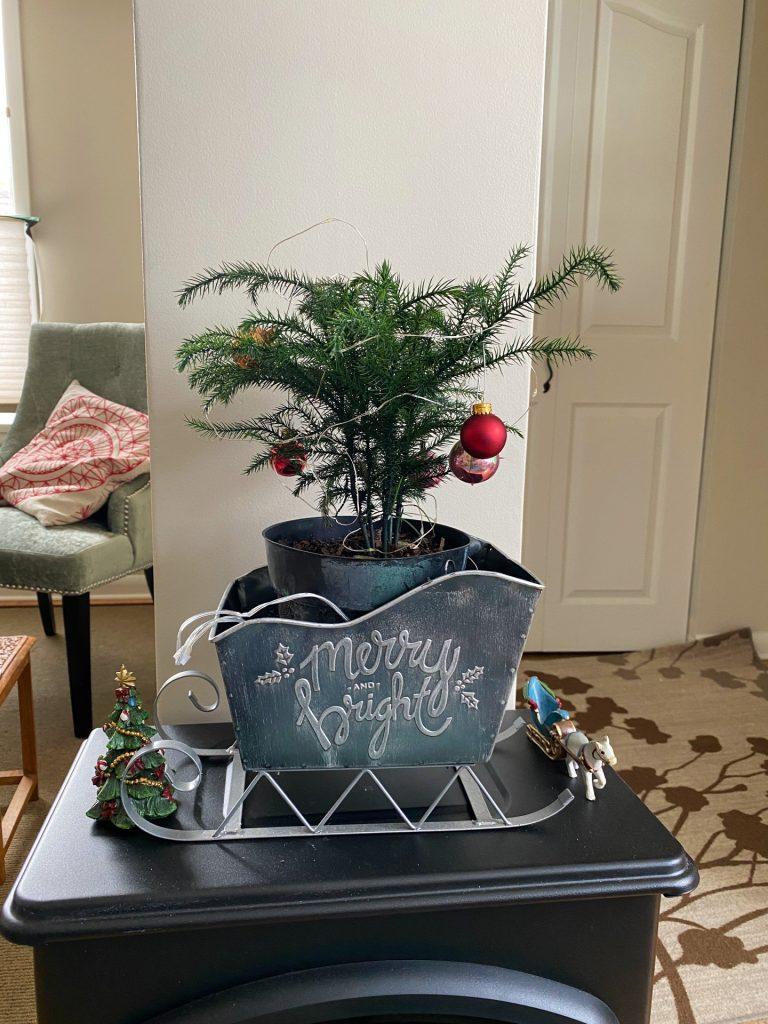 A tiny simple tree for someone sitting vigil