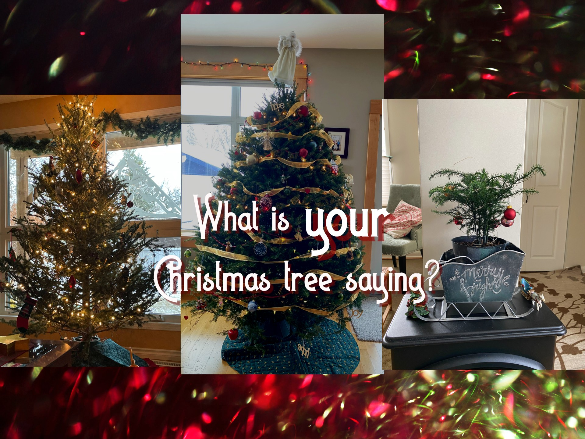 What is your Christmas tree saying